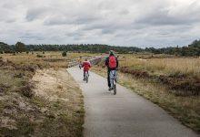 Photo of Wild spotten tijdens het fietsen op de Hoge Veluwe