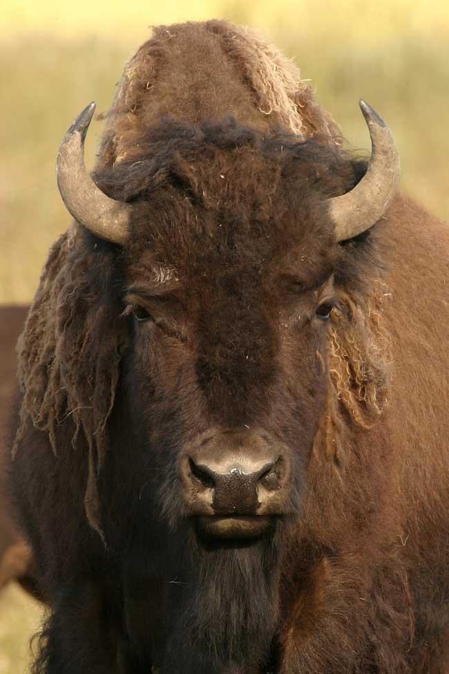 De Wildlife Tag - Welke dieren zag jij allemaal in het wild? - Reislegende.nl