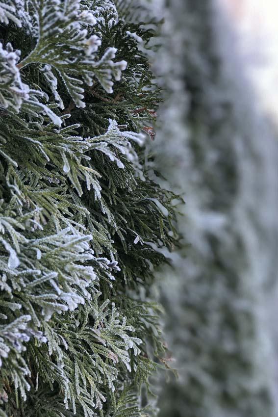 Rijp aan de bomen - AllinMam.com