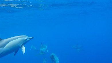 Photo of Walvissen en dolfijnen spotten in Madeira archipel