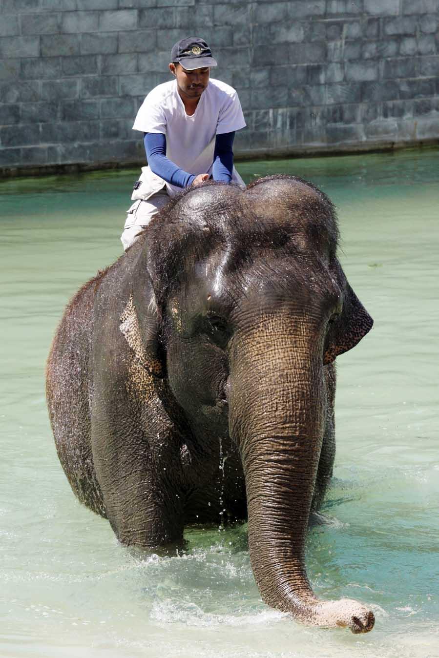 Badende olifanten in Pairi Daiza - Het koninkrijk van Ganesha - AllinMam.com