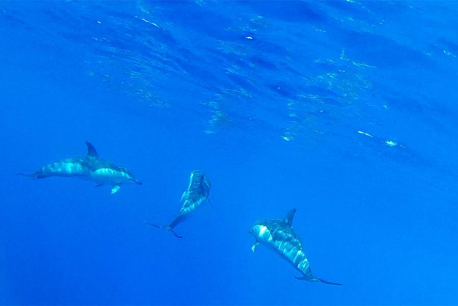 Dolfijnen spotten met Mar Dourado - AllinMam.com