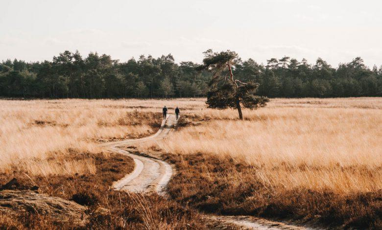 Deelerwoud, mooiste plek op de Veluwe? - Reislegende.nl