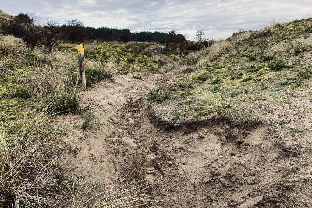 Kraansvlak, wisentenpad - Op zoek naar wisenten in de Kennemerduinen - Reislegende.nl