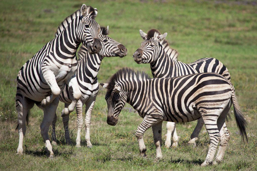 De Wildlife Tag – Welke dieren zag jij allemaal in het wild? - Reislegende.nl