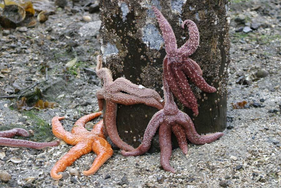 Zeesterren te zien door laag water in Lagoon Cove - AllinMam.com