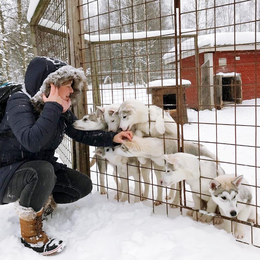 Bezoek aan husky farm in Finland - AllinMam.com