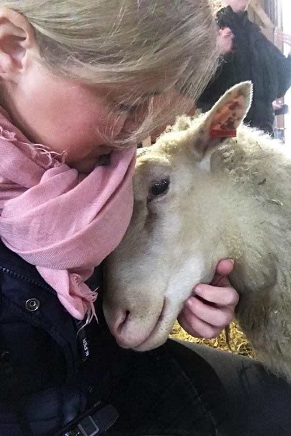 knuffelen met schapen in Finland - AllinMam.com