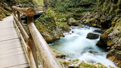 Must see in Slovenië: de prachtige Vintgar kloof - Reislegende.nl