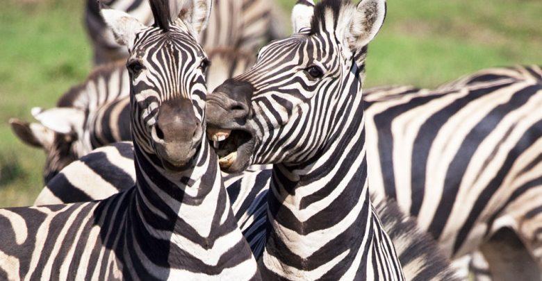 Photo of De Wildlife Tag – Welke dieren zag jij allemaal in het wild?