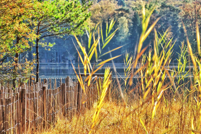 Herfst in de Vogezen: verblijf in een goud gele wereld - Reislegende.nl
