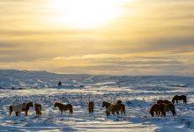Photo of IJsland route voor 3 dagen (4 nachten)