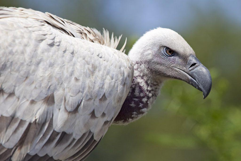 Roofvogels spotten in Zuid-Afrika - Reislegende.nl