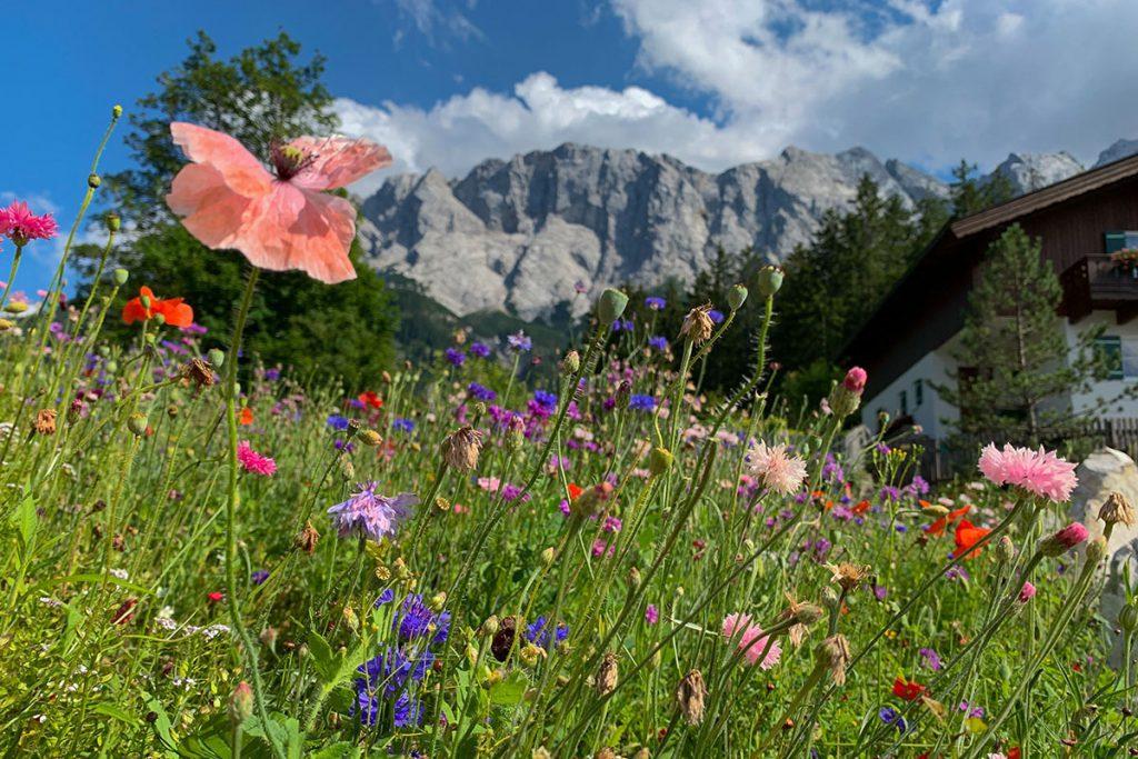 Bloeiende bloemen in Beieren Duitsland - Reislegende.nl