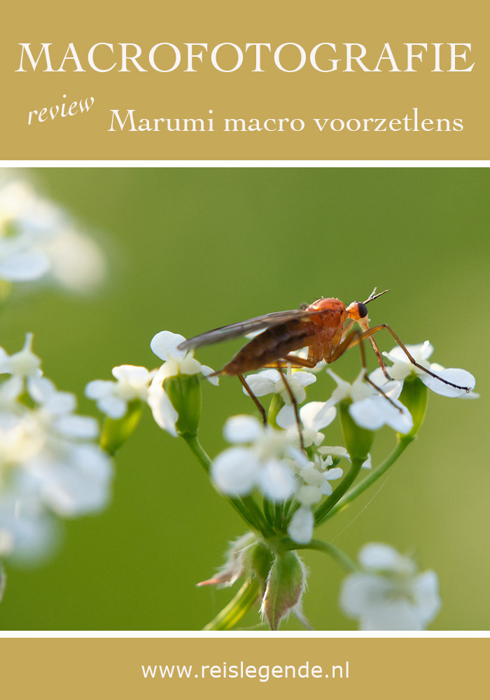 Fotograferen met een macro voorzetlens - Reislegende.nl