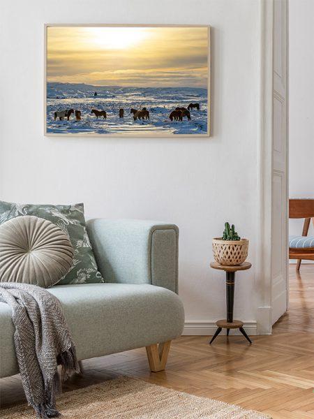 Poster IJslandse paarden in de sneeuw - Reislegende.nl