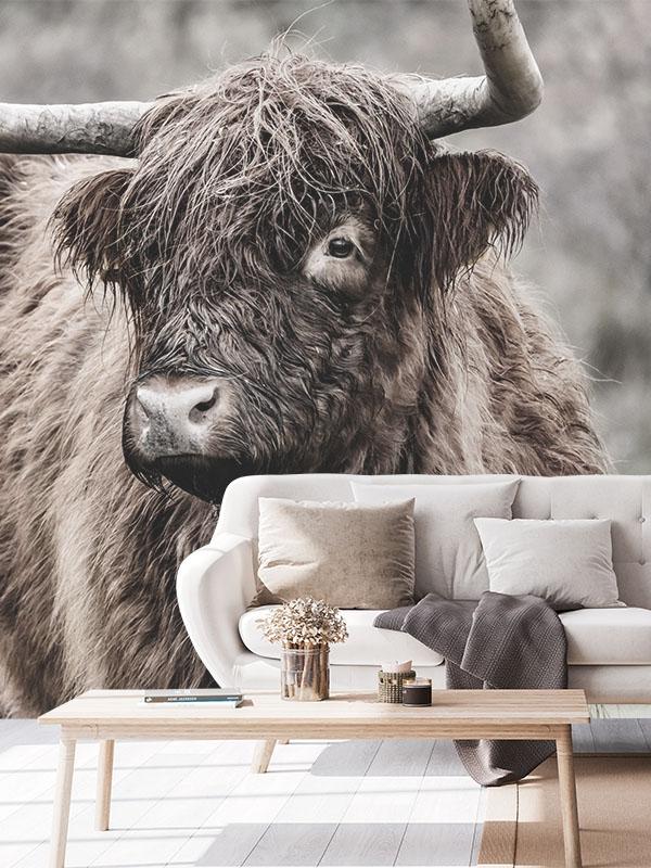 Schotse hooglander behang - Reislegende.nl