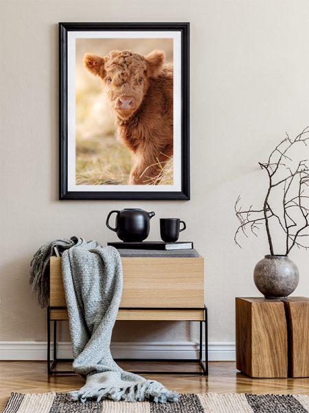 Poster Schotse hooglander kalf in warm licht - Reislegende.nl