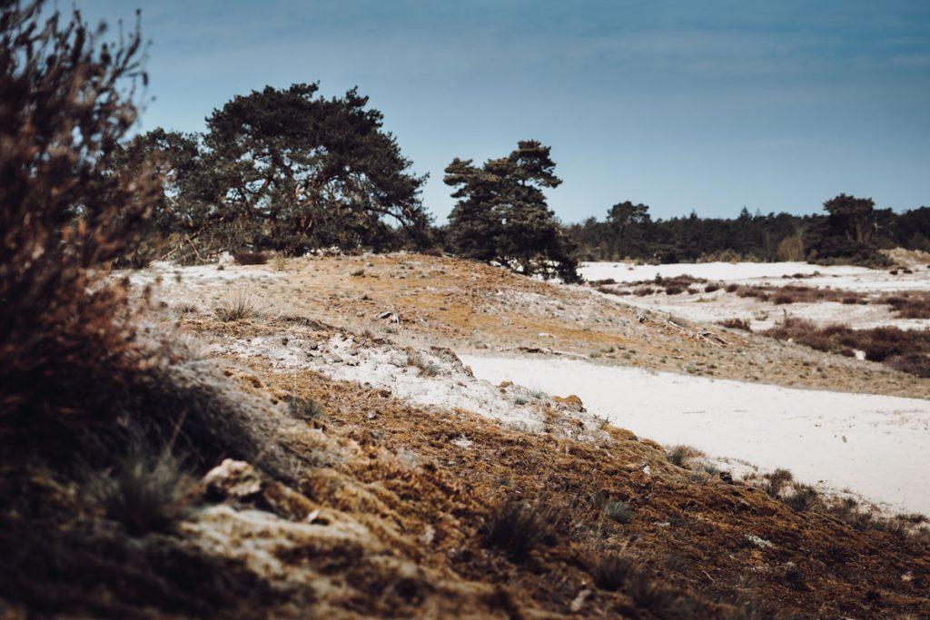 Stuifzandgebied Hulshorsterzand, prachtig gebied voor een korte of lange wandeling - Reislegende.nl
