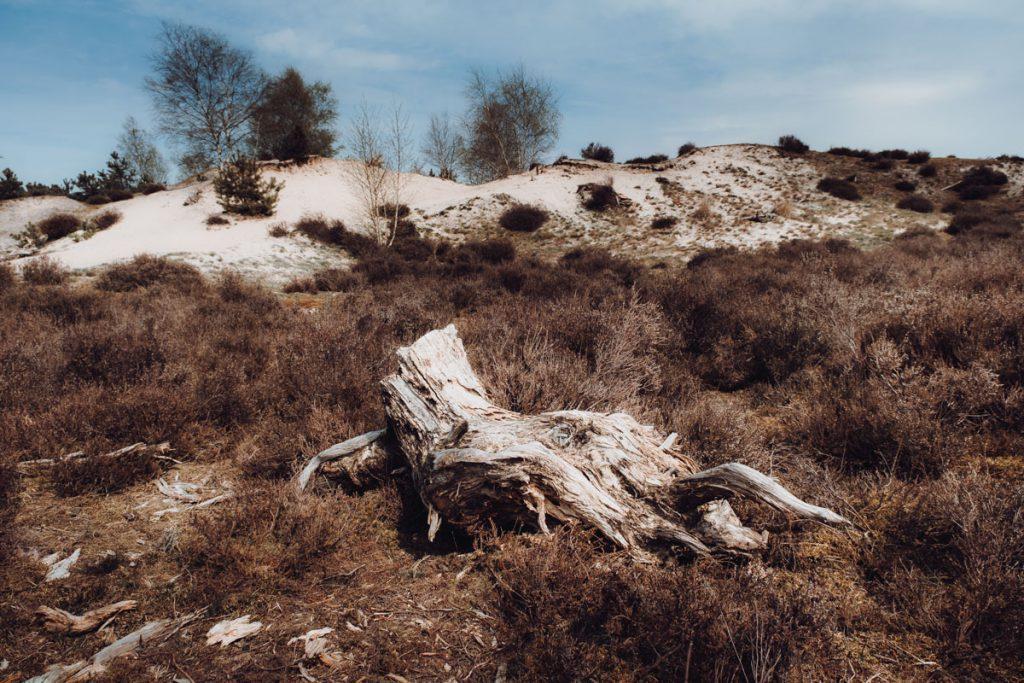 Zandverstuiving Hulshorsterzand, prachtig gebied voor een korte of lange wandeling - Reislegende.nl