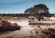 Herstelplan Hulshorster zandvlakte, Hulshorsterzand zandverstuiving, prachtig gebied voor een korte of lange wandeling - Reislegende.nl
