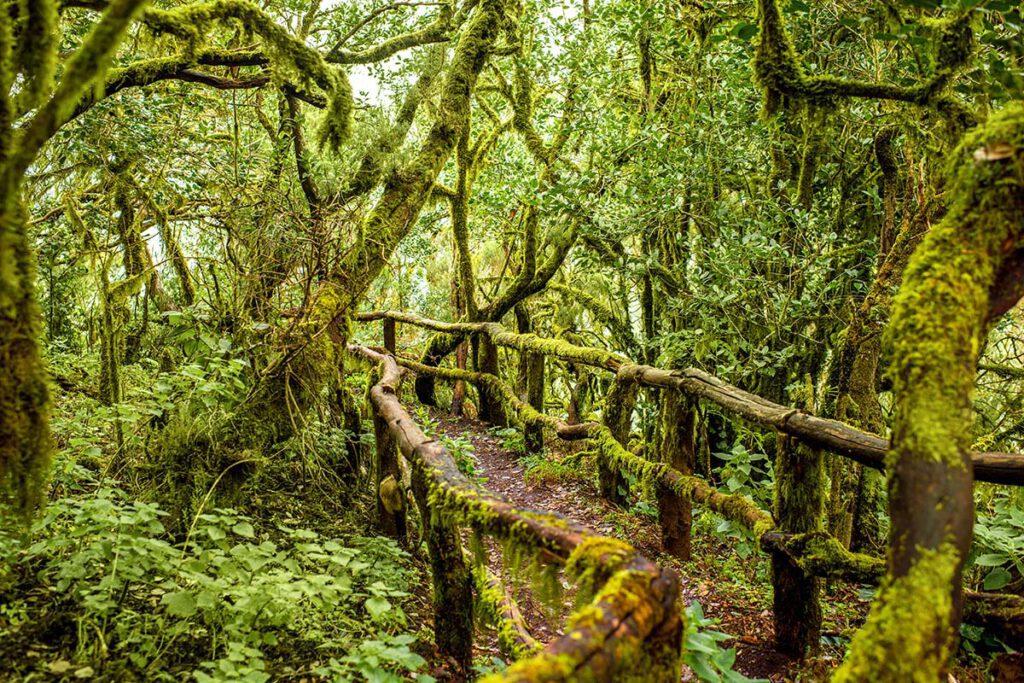 Garajonay national park, La Gomera - De leukste hotspots voor een vakantie op de Canarische Eilanden - Reislegende.nl