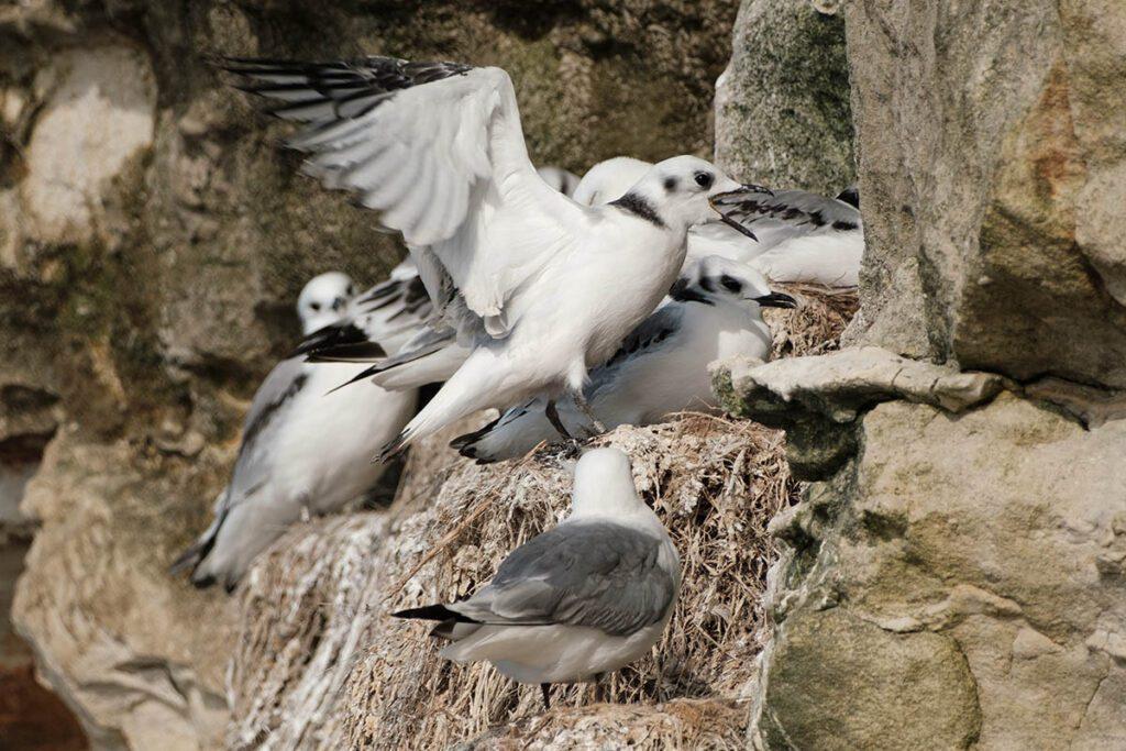 Broedende vogels Bulbjerg, Noord-Jutland bezienswaardigheden en tips in het noorden van Denemarken